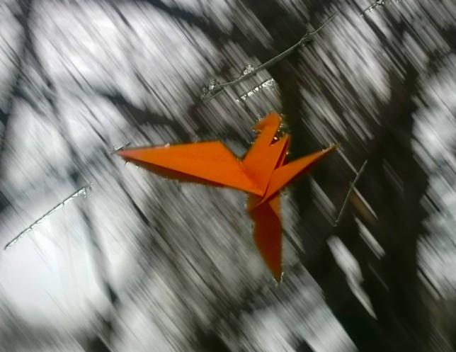 Crane in flight 2.jpg