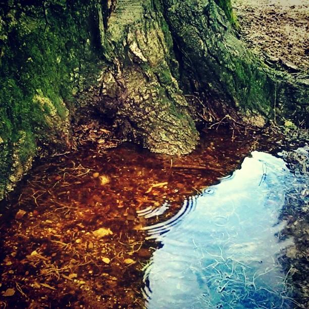 Maple & rain water.jpg