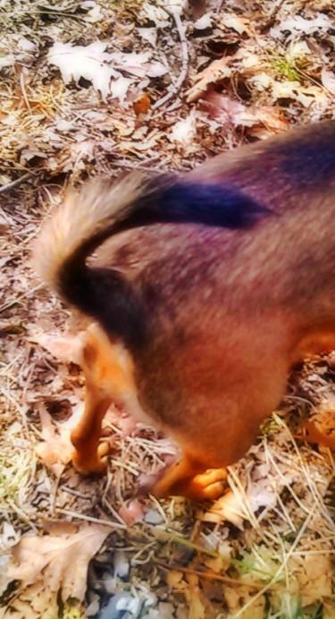Josie Tail.jpg