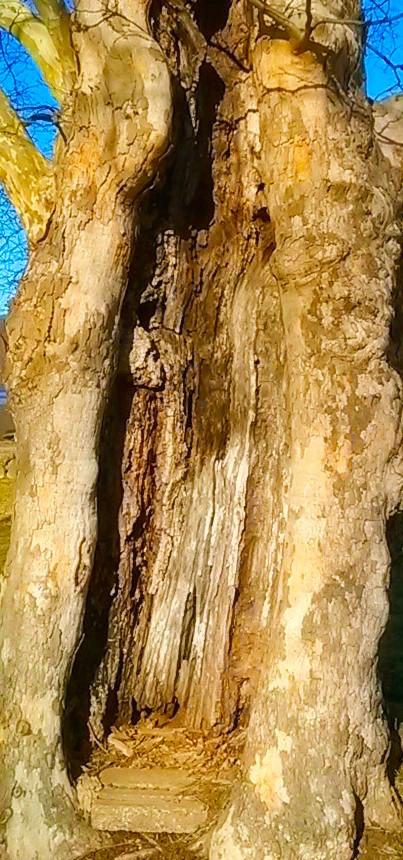 Tree Womb detail.jpg