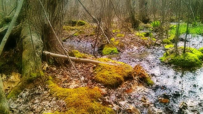 Damp Roots -- 3:16.jpg