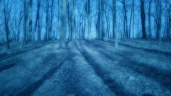 Moonlit Wood.jpg