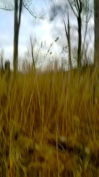 Wind in Wild Grasses -- 3:16.jpg