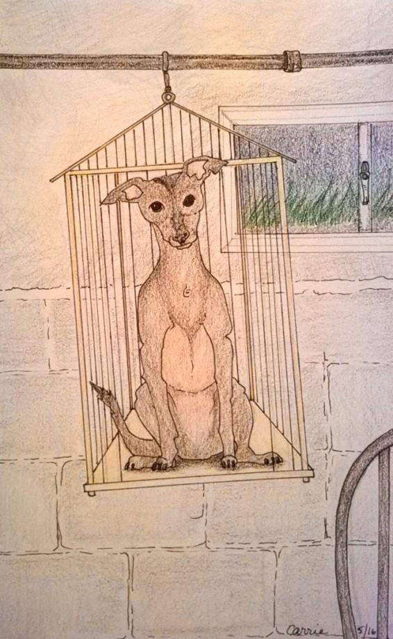 Birdcage Dog.jpg