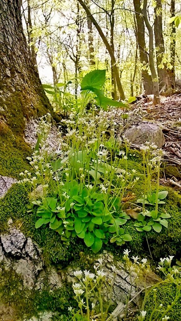Wildflowers & tree's roots.jpg