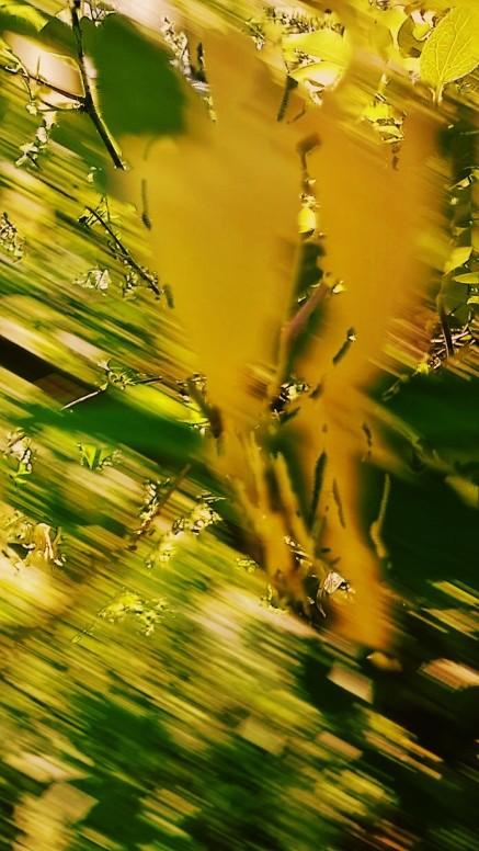 Honeysuckle motion.jpg