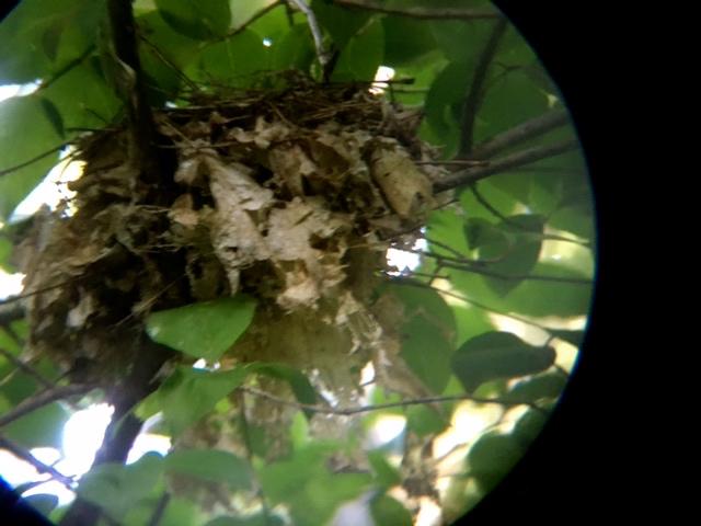 Nest & Curved Lens.JPG