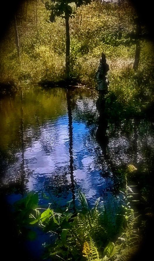 Dream reflection.jpg
