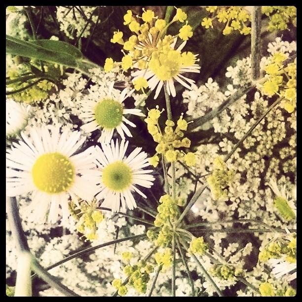 Wildflower Bouquet.jpg