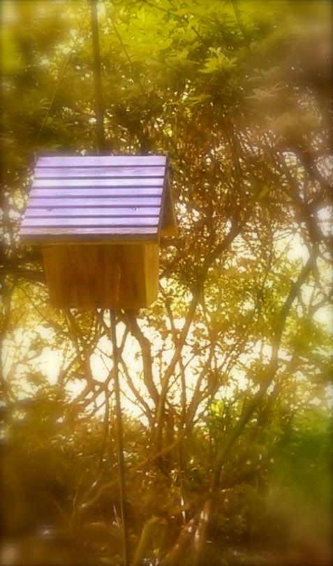 Wren's House.jpg