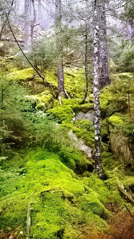 Moss Wood.jpg