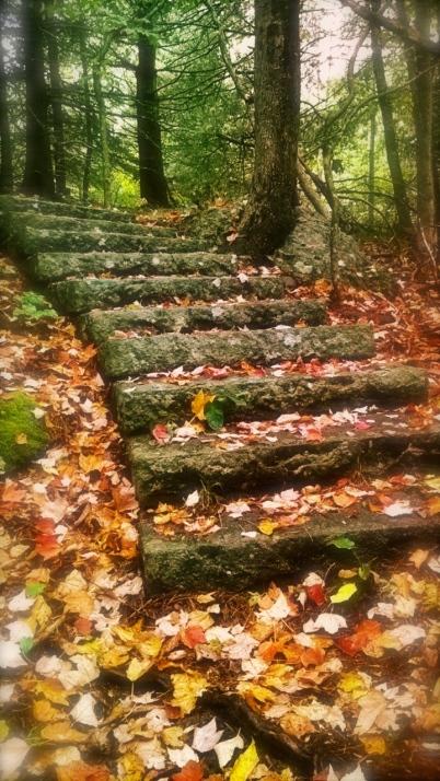 Woodland steps.jpg