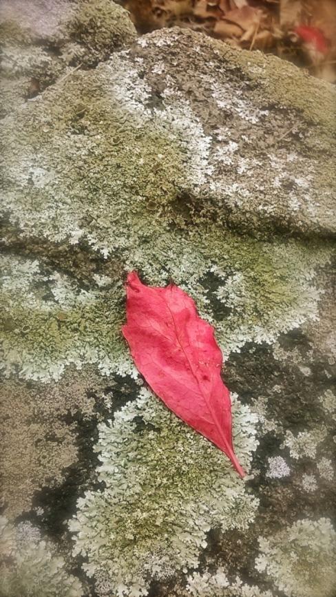 Scarlet Leaf.jpg