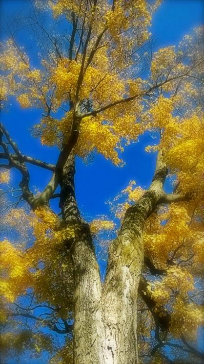 Maple & Sky.jpg