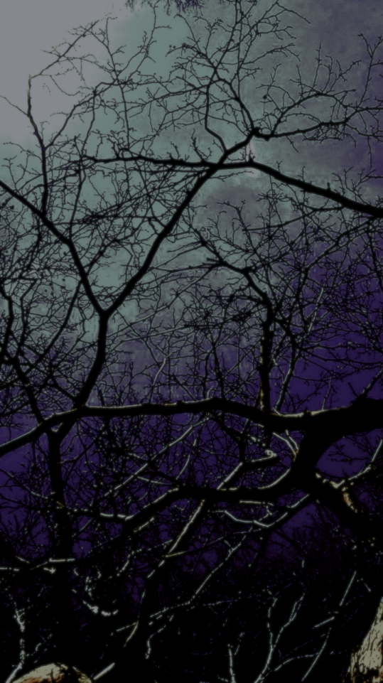 Moonlight caught in tree branches.