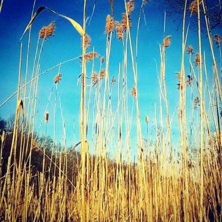 Sky-high Grasses.jpg
