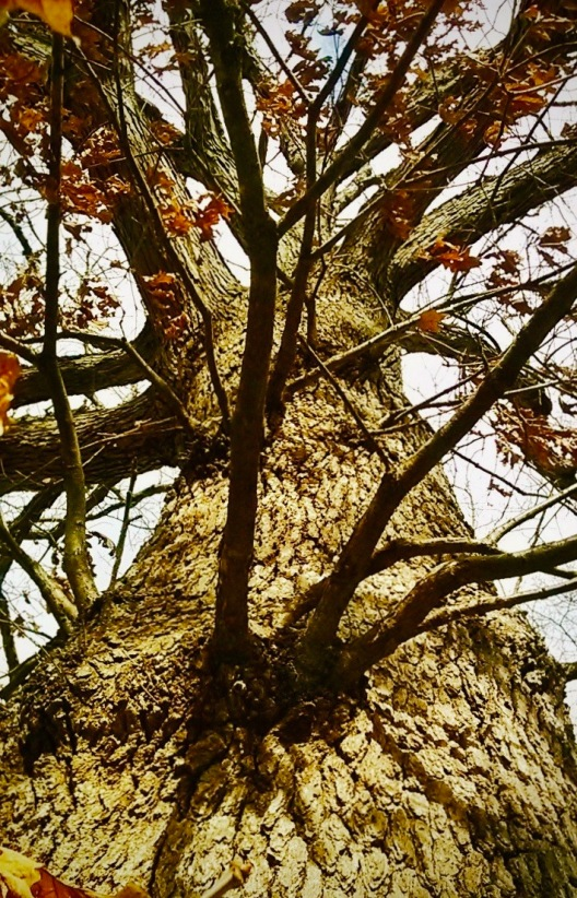 Aged Oak 2.jpg