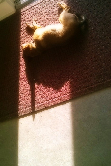 Josie in Sunbeam.jpg