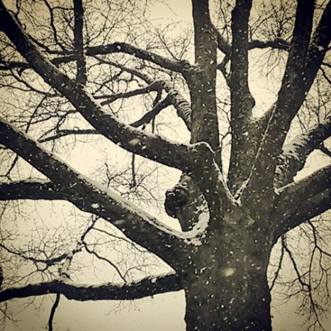 Oak & Snow.jpg