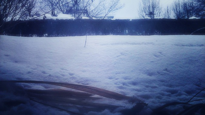 Snow, Worm's eye view.JPG