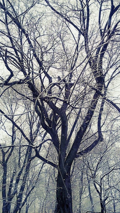 Snowy Olaf.jpg