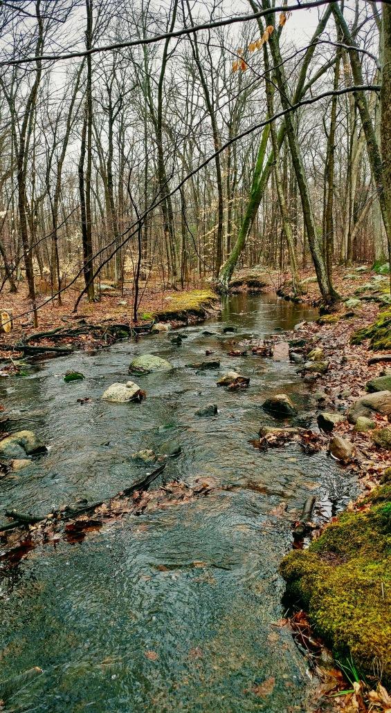 Rigby's Creek, Tourne Park.jpg