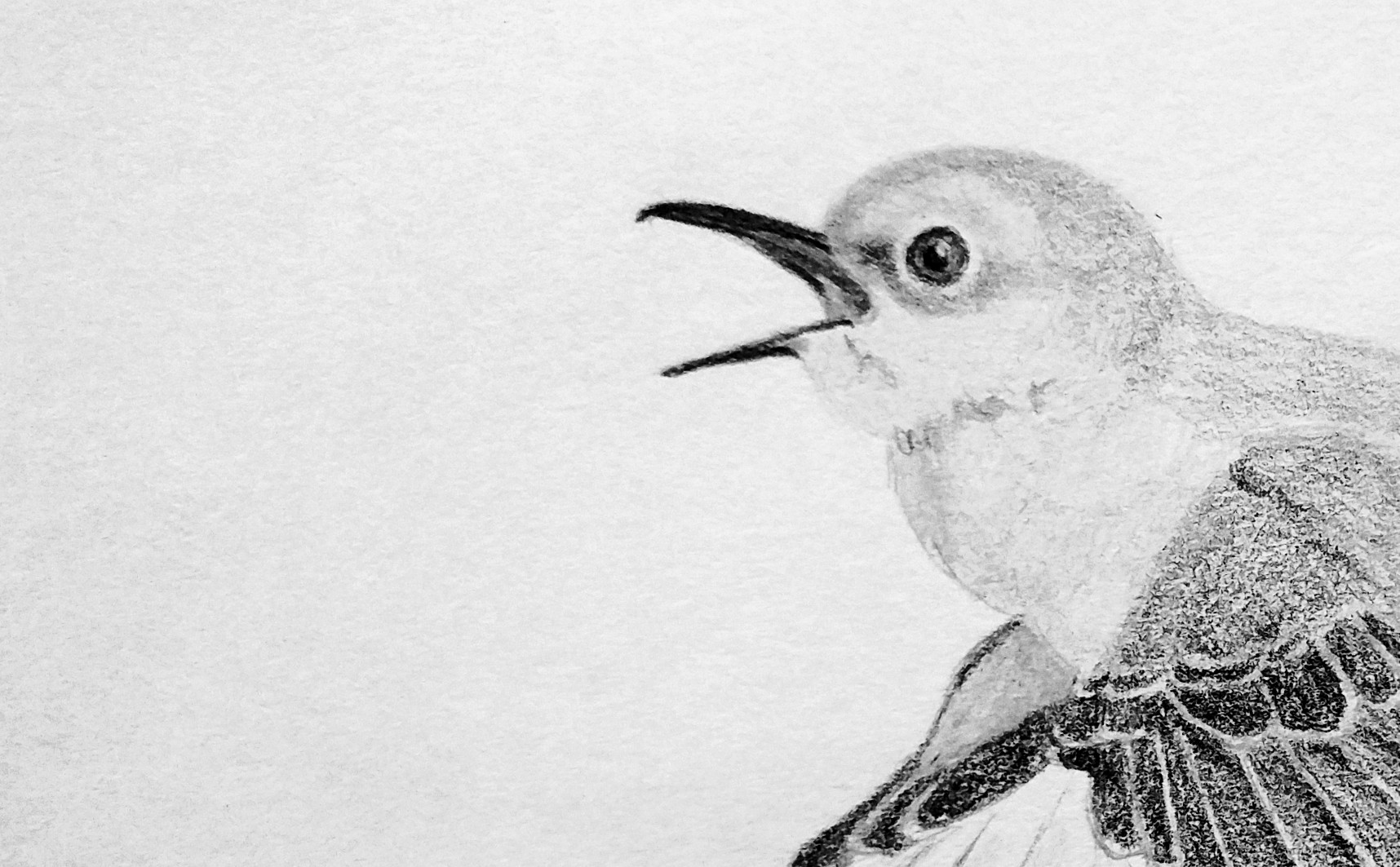 Mocking bird detail.jpg