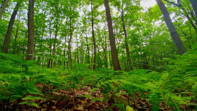 Fern Wood, Tourne.jpg