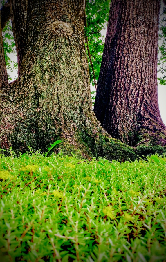 flora arboreal trees sedum nature green beauty