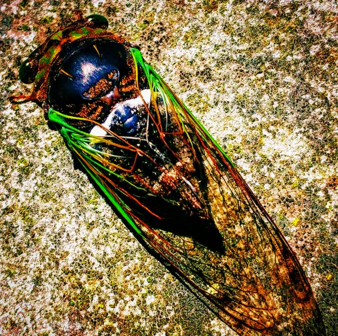 Icarus -- An Imagae.png