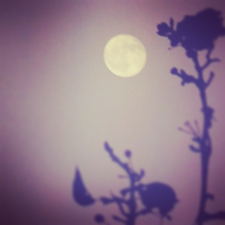 Moonwise.jpg