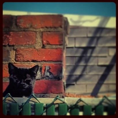 Monochromati-cat.jpg
