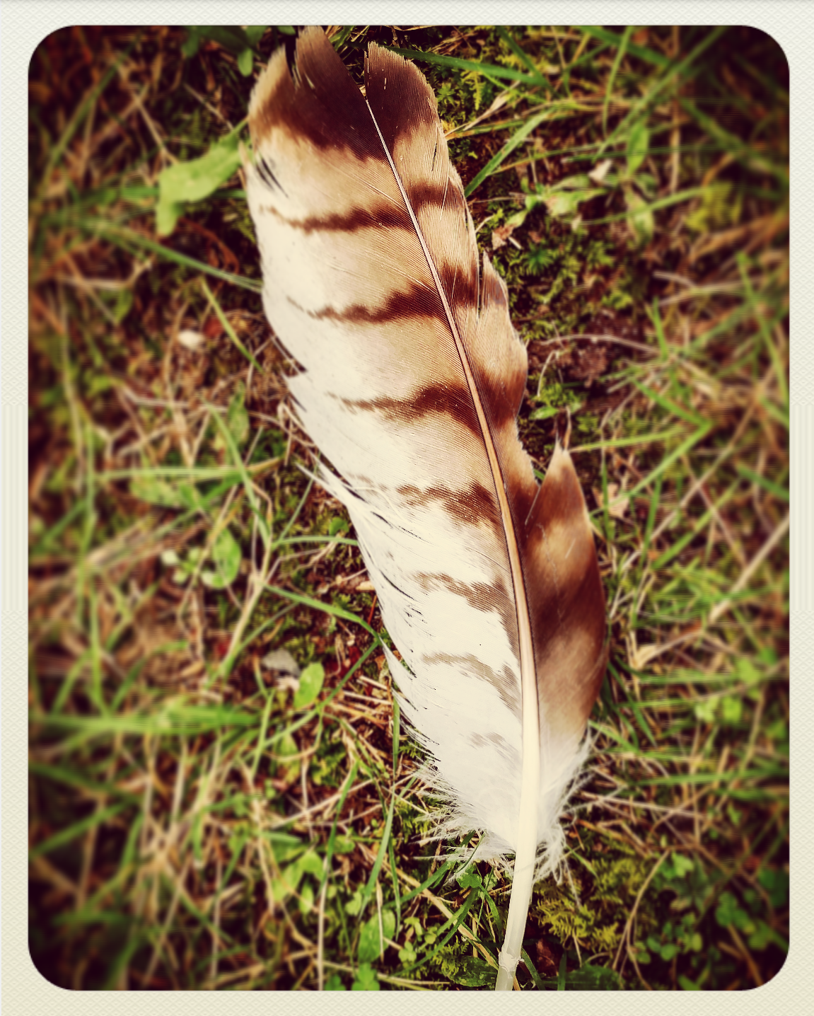 Little Hawk Feather.png