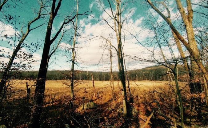 Resolved (Rattlesnake Swamp) 2.jpg