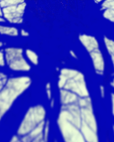 tree shadow.png