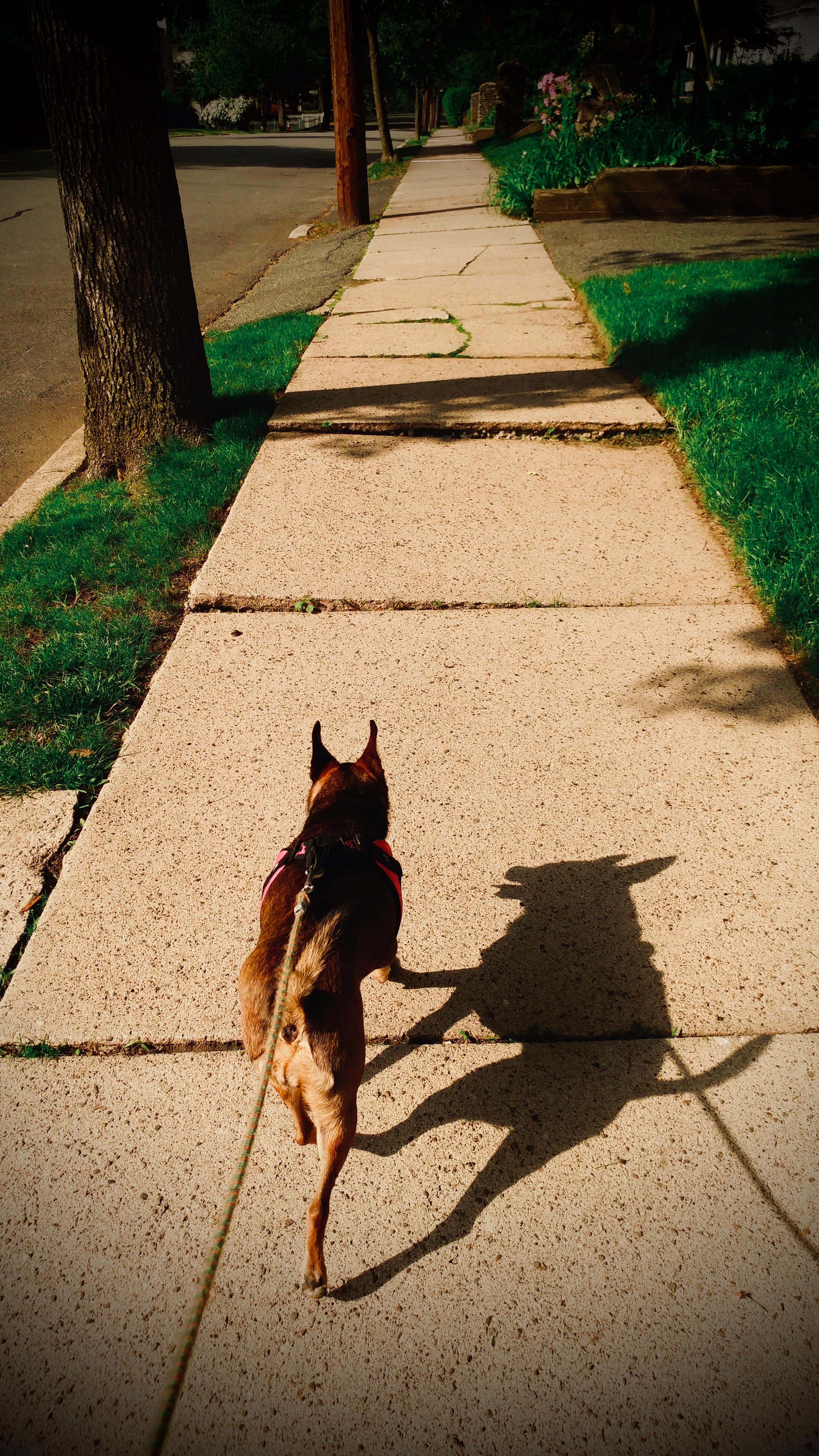 Josie & Shadow.jpeg