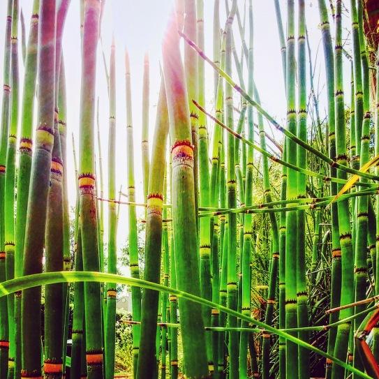 Bamboo Stand.jpg