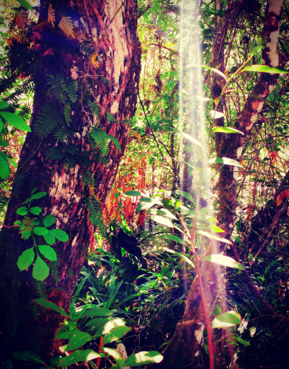 Light, Corkscrew Swamp Sanctuary.png