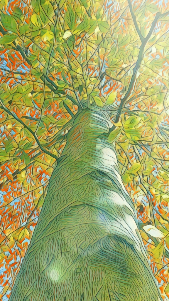 Stylized photograph of a Beech Tree, as if it were a drawing.