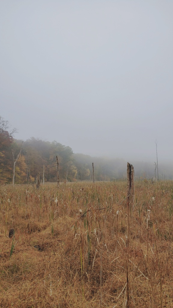 Tourne Park's Rattlesnake Meadow, blanketed in fog.