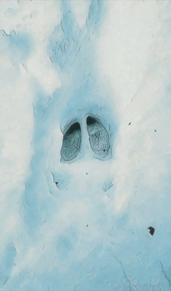 A single hoof print of a whitetail deer pressed into the snow.