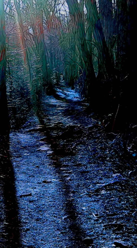 A path through moonlit woods at night...