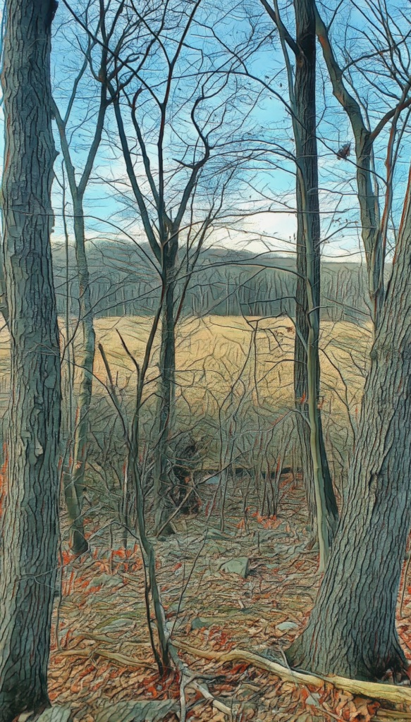 An autumn view of fallow, grassy sward seen through a stand of bare trees, bound in the distance by a wooded hill.