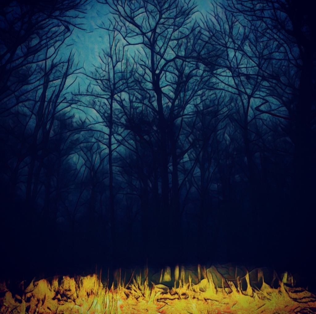 At atmospheric photo of leafless trees at night crowding around a pool of yellow light.