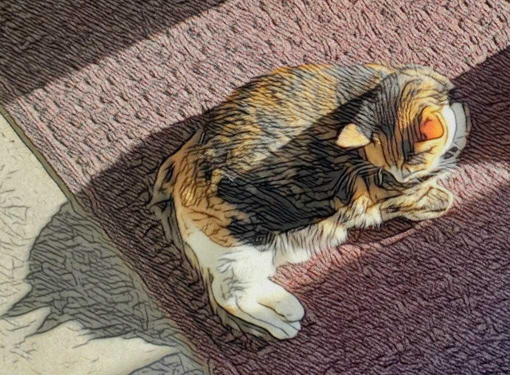 A plump calico cat lying in a patch of sunlight.
