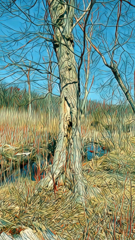 A photo of a leafless maple tree in a marsh.