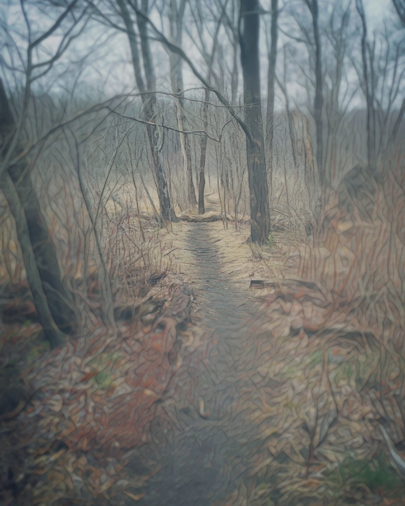 A photo of a misted, foggy path through a scrubby woodland.