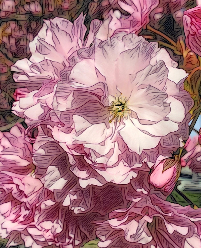 An artfully altered photo of a cluster of blossoming pink cherries.