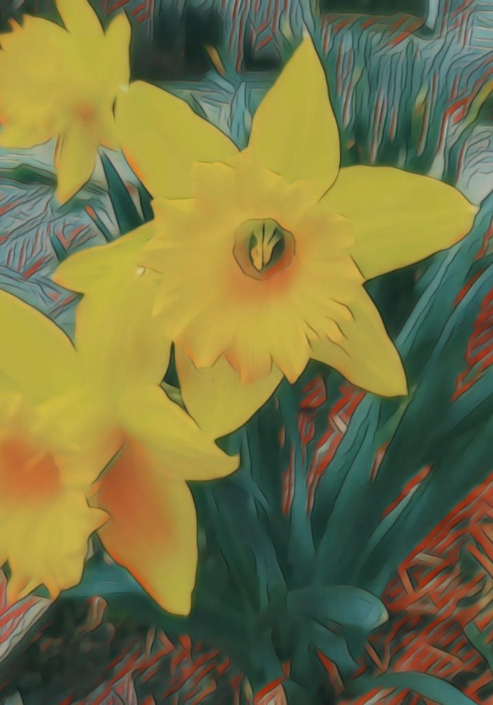 A photograph of bright yellow daffodils in full bloom.