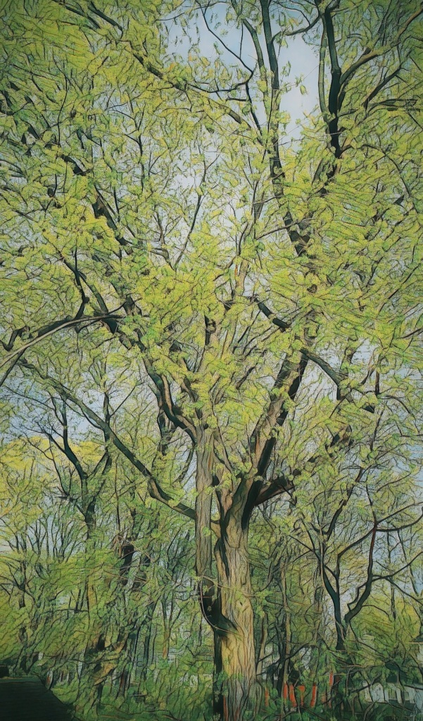 An altered photo of a great Norway Maple, fringed in new leaves.